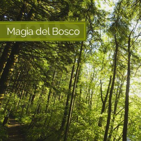 magia-del-bosco